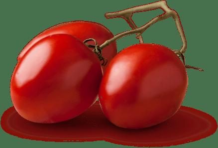 Tracciabilità della filiera del pomodoro