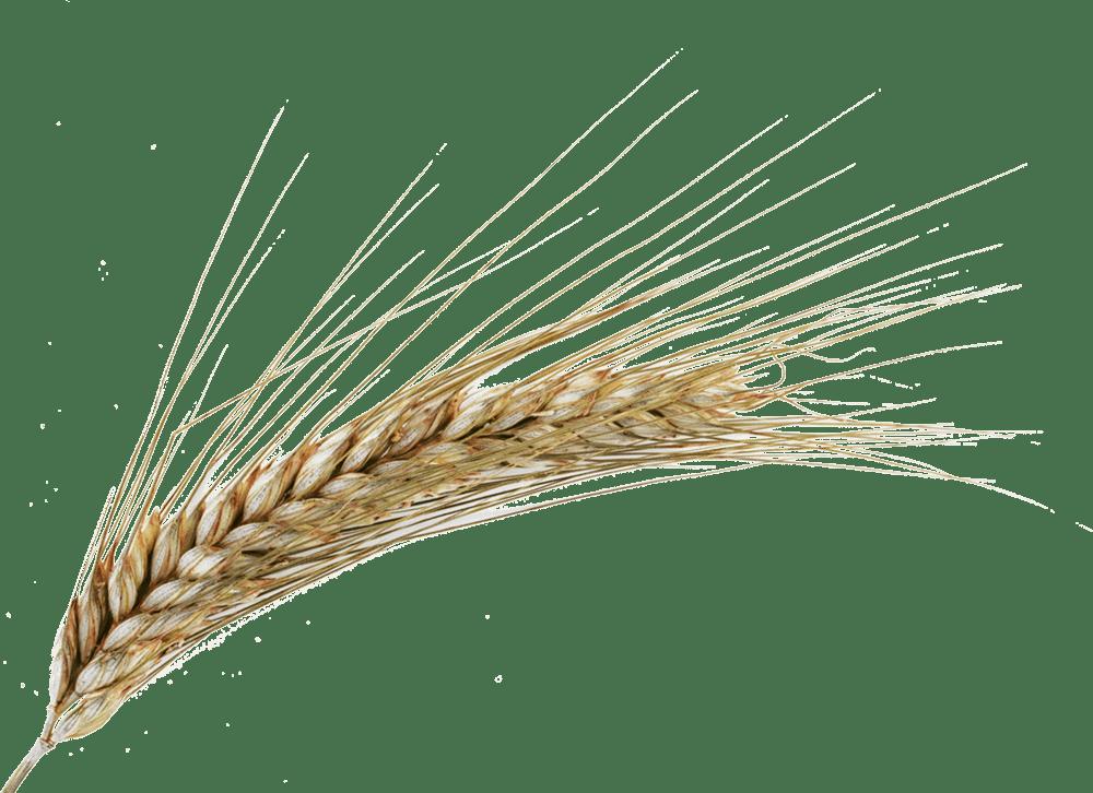 Tracciabilità della filiera del grano